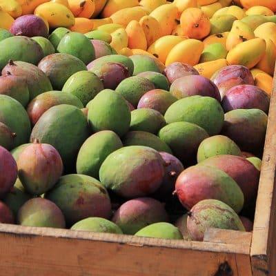 Mangos in Kiste Quadrat